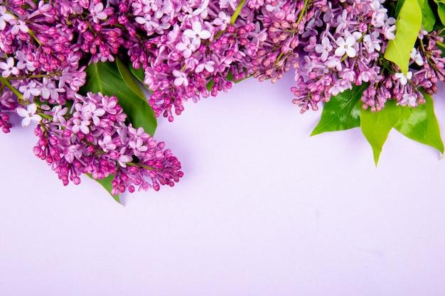 Vista superior de flores lilas aisladas sobre fondo blanco con espacio de copia