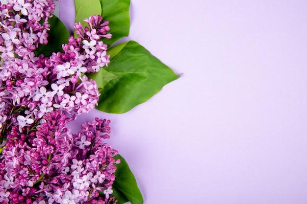 Vista superior de flores lilas aisladas sobre fondo de color rosa con espacio de copia