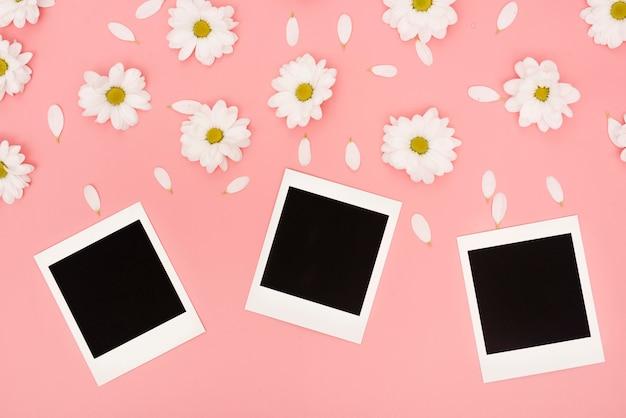 Vista superior de flores de margarita blanca y fotos polaroid