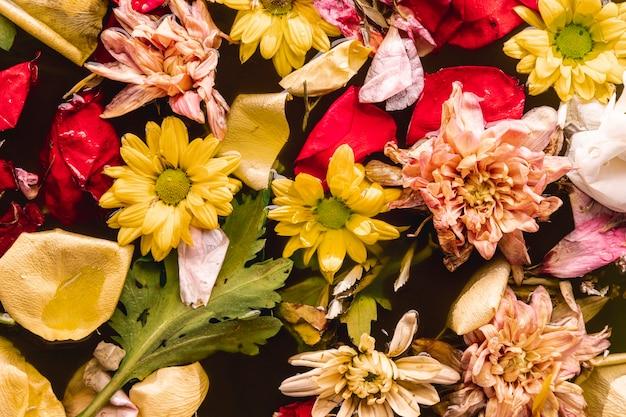 Vista superior flores multicolores en agua