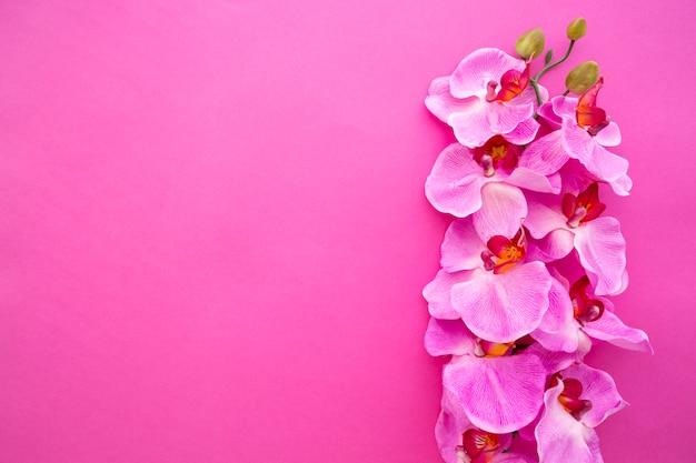 Vista superior de las flores de orquídeas sobre fondo rosa brillante