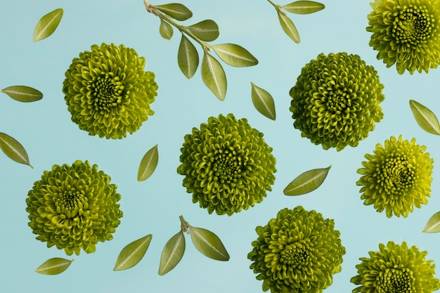 Vista superior de flores de primavera con hojas.