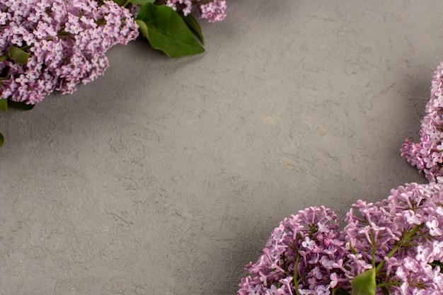 Vista superior flores púrpura hermosa en el fondo gris