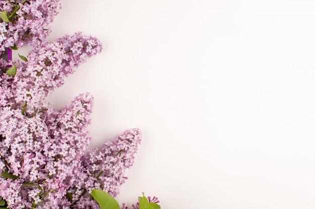 Vista superior flores púrpura hermosa en el piso blanco