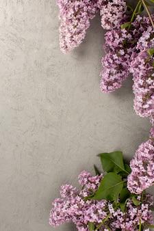 Vista superior flores púrpura hermoso aislado en el piso gris