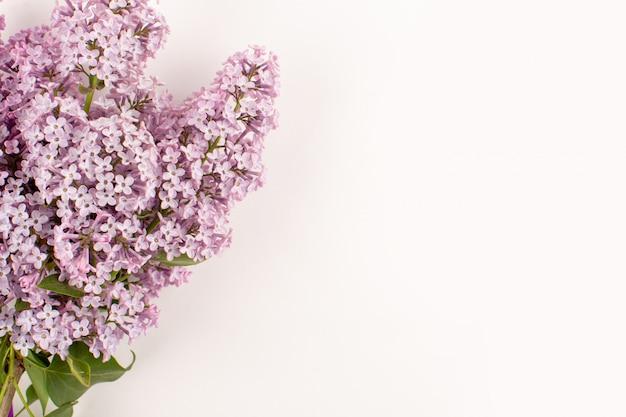 Vista superior flores púrpuras hermosas en el piso blanco
