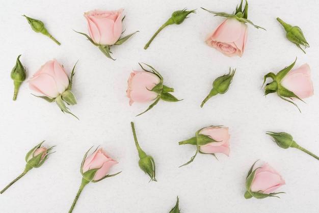 Vista superior de flores de rosa de primavera