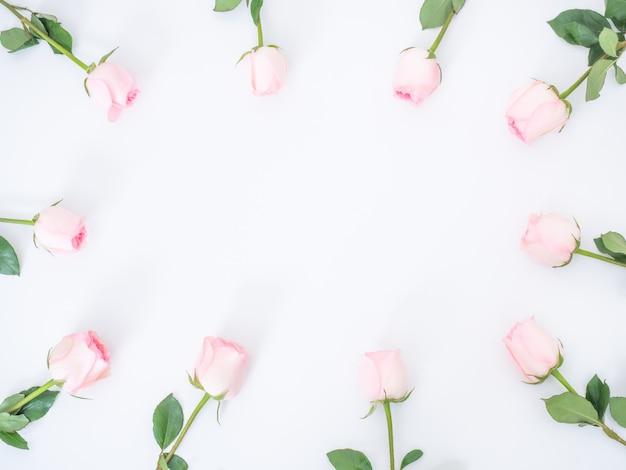 Vista superior de flores rosas rosadas en la pared blanca