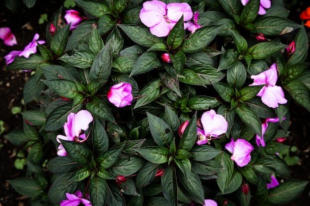 Vista superior fondo de flores de color púrpura