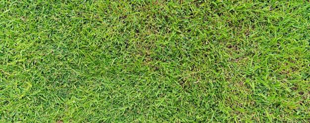 Vista superior del fondo natural de la textura del suelo de hierba verde en primavera fresca.