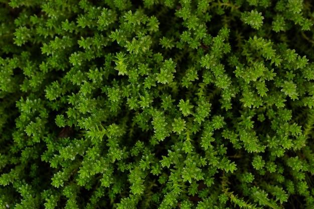 Vista superior del fondo de pantalla de plantas de hierba