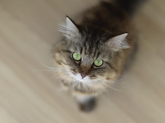 La vista superior de un gato sorprendido hace ojos grandes