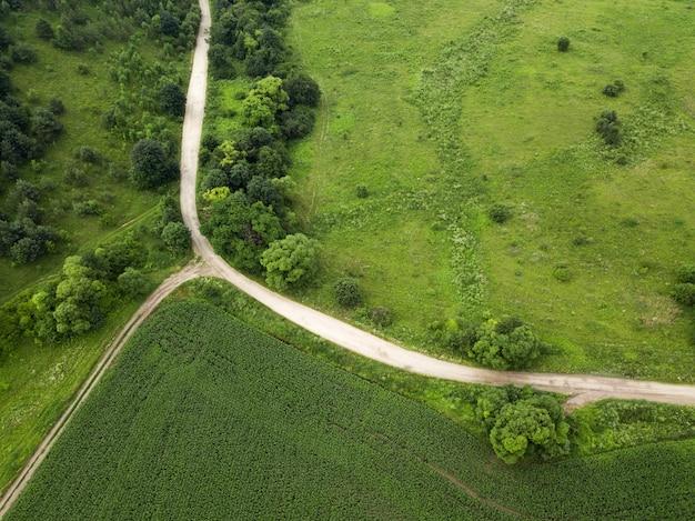 Vista superior de un gran campo de maíz verde y un camino rural. paisajes rurales