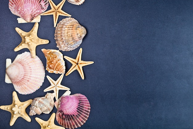 Vista superior del grupo de conchas y estrellas de mar sobre fondo negro.
