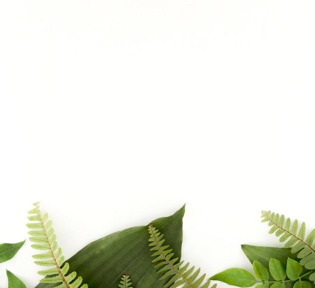 Vista superior de helechos y hojas con espacio de copia