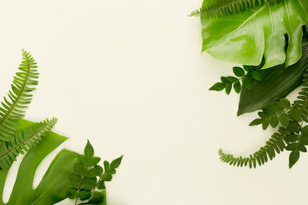 Vista superior de helechos con hojas de monstera y otras hojas.