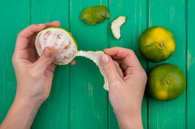 Vista superior hembra pelando mandarinas de la cáscara en una pared verde