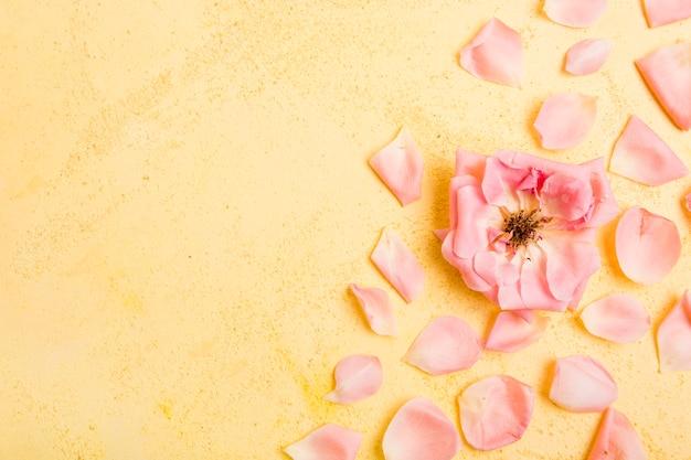 Vista superior de hermosa rosa con pétalos y espacio de copia
