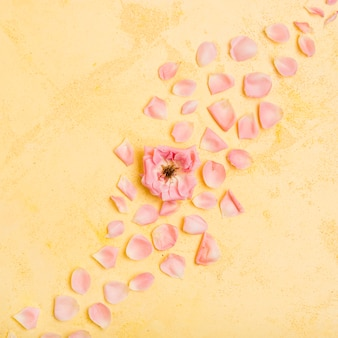 Vista superior de hermosa rosa con pétalos