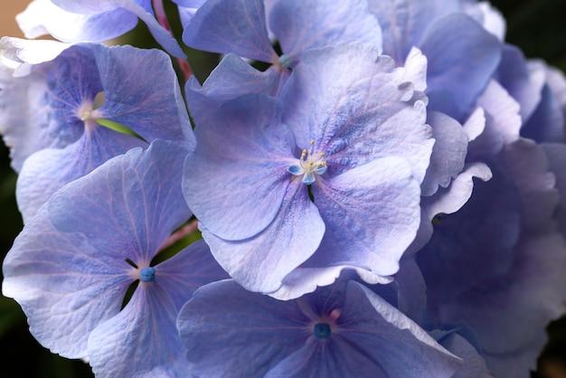 Vista superior de hermosas flores de color azul