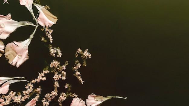Vista superior hermosas flores rosas en agua negra con espacio de copia