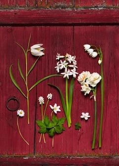 Vista superior de hermosas flores silvestres blancas de primavera sobre fondo rústico de madera roja.