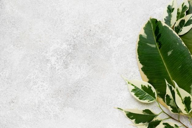 Vista superior de hermosas hojas de plantas con espacio de copia