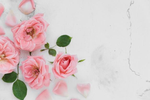 Vista superior de hermosas rosas de primavera con pétalos y fondo de mármol
