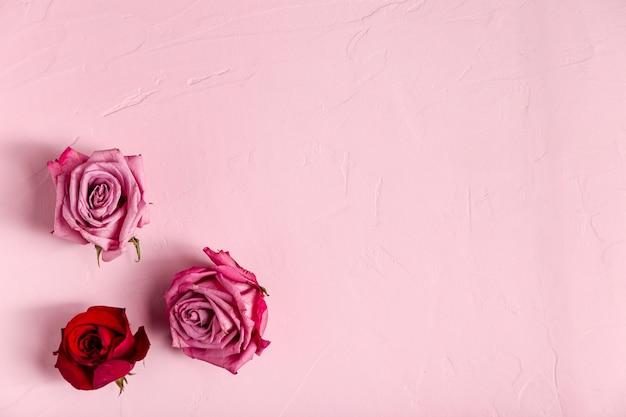 Vista superior de hermosas rosas