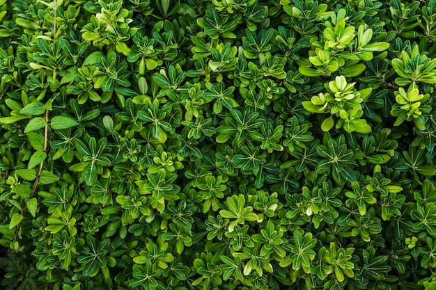 Vista superior hermoso arreglo de follaje verde