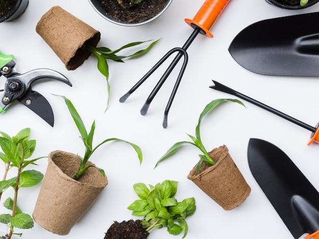 Vista superior herramientas de jardinería y plantas