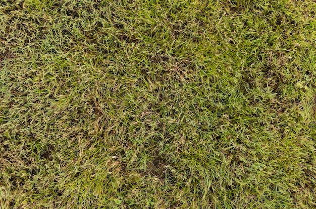 Vista superior de la hierba en el patio trasero