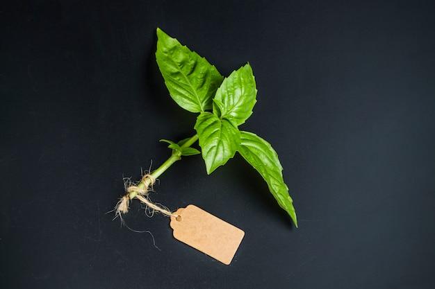 Vista superior de hierbabuena con una etiqueta de cartón