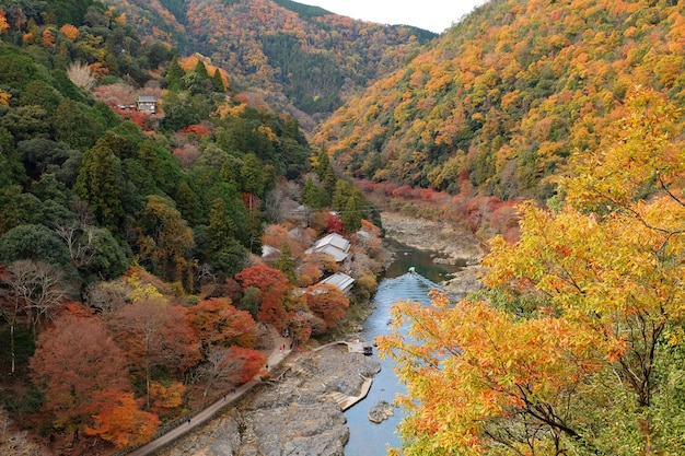 Vista superior de la hoja del árbol colorido en la colina