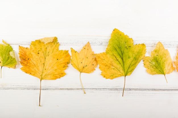 Vista superior de hojas amarillas de otoño