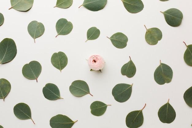 Vista superior de hojas y arreglo de rosas