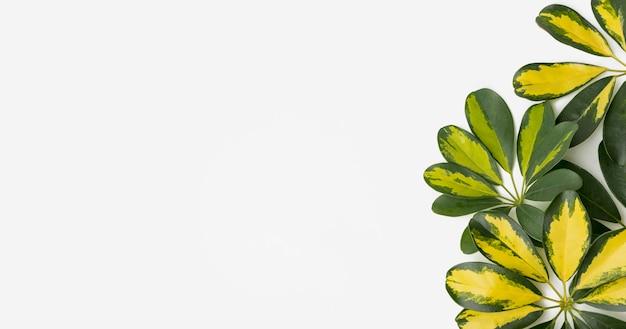 Vista superior de hojas botánicas con espacio de copia
