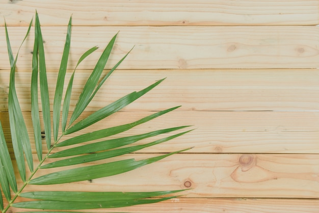 Vista superior de las hojas de coco sobre fondo de madera