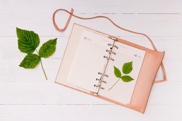 Vista superior de hojas comunes de haya con libreta.