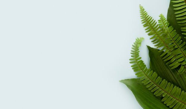 Vista superior de hojas de helecho con espacio de copia