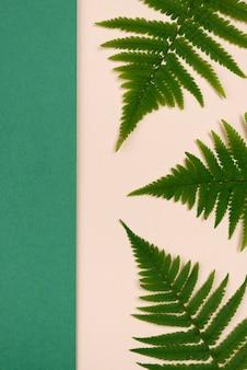 Vista superior de hojas de helecho