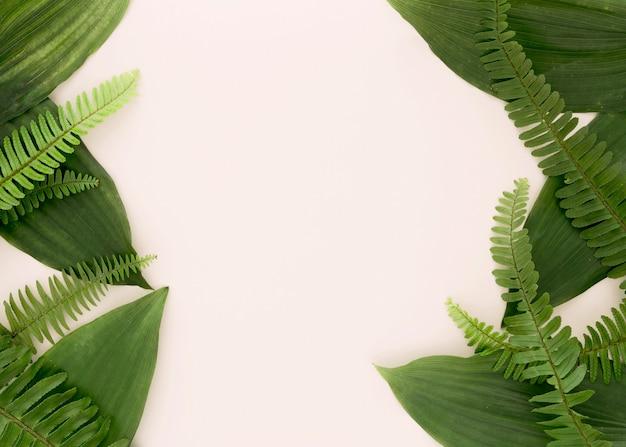 Vista superior de hojas y helechos con espacio de copia