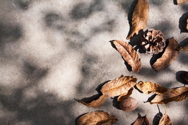 Vista superior de hojas de otoño y conos sobre hormigón con sombra. diseño de otoño con espacio de copia