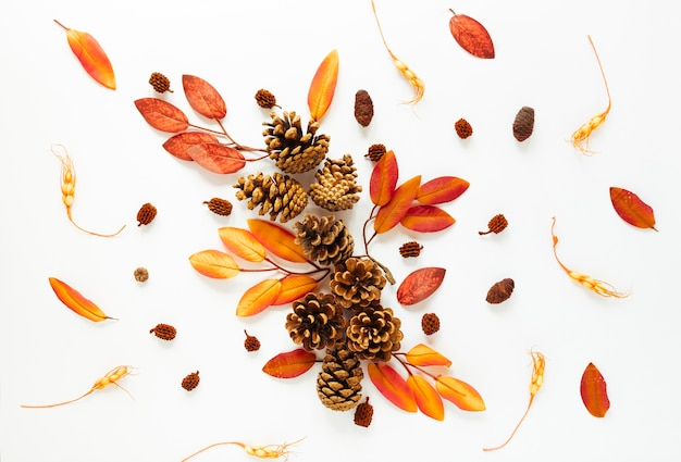 Vista superior de las hojas de otoño sobre fondo blanco