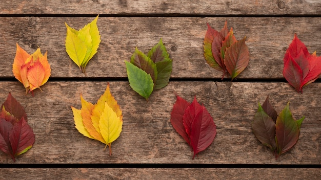 Vista superior de las hojas de otoño