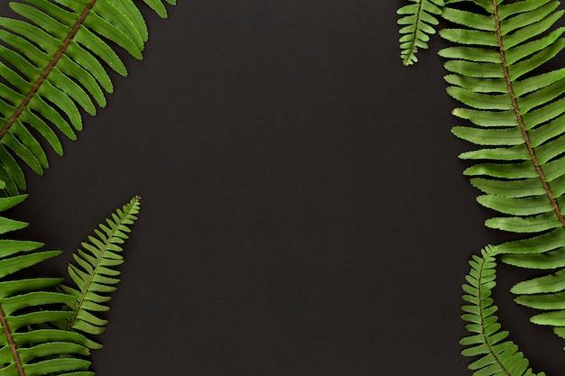 Vista superior de las hojas de la planta de helecho con espacio de copia