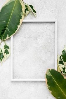 Vista superior de hojas de plantas con marco.