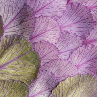 Vista superior de las hojas de las plantas.