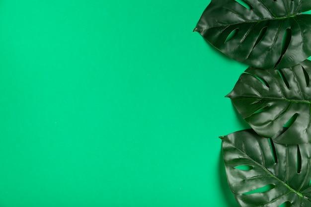 Vista superior de hojas realistas en papel