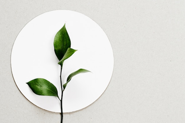 Vista superior hojas sobre círculo blanco